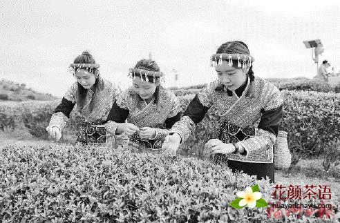 """让福州茉莉花茶香飘世界 习近平主席祝贺首个""""国际茶日"""""""